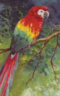 AS76 Animals - Birds - Parrot, Artist Signed Roch Or Rooh? - Birds