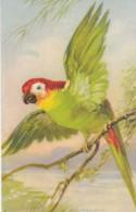 AS76 Animals - Birds -green Parrot - Artist Signed Wagner - Birds