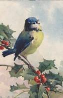 AS76 C. Klein - Birds - Blue Tit On A Holly Branch - Klein, Catharina
