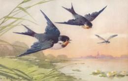 AS76 C. Klein - Birds - 2 Swallows And A Dragonfly - Klein, Catharina