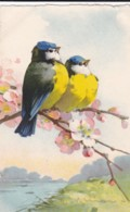 AS76 C. Klein - Birds - 2 Blue Tits On A Branch With Pink Blossom - Klein, Catharina