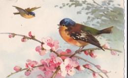 AS76 C. Klein - Birds - 2 Birds With Pink Blossom - Klein, Catharina