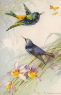 AS76 C. Klein - Birds - Hummingbirds, Butterflies, Flowers - Klein, Catharina