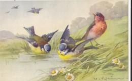 AS76 C. Klein - Birds - Blue Tits By A Lake - Klein, Catharina