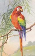 AS76 C. Klein - Birds - Red Parrot On A Branch - Klein, Catharina