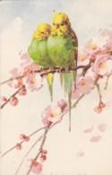 AS76 C. Klein - Birds - 2 Parakeets, Pink Blossom - Klein, Catharina