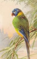 AS76 C. Klein - Birds - Green Parrot - Klein, Catharina