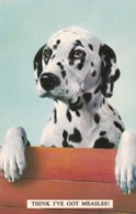 AS76 Animals - Dalmation Dog - Think I've Got Measles - Dogs