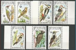 Oiseaux - Pic Vert/Vogels -  Groene Specht** - Mongolie/Mongolië - Mongolie