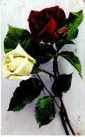 Rosenstrauß 1913 - Feiern & Feste
