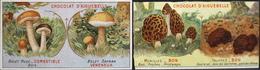2 Chromos & Images > Chocolat > Aiguebelle - Sur Les Champignons - En Bon Et. - Aiguebelle
