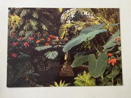 AK  KLEINES PALMENHAUS LITTLE HOUSE OF PALMS  PETITE MAISON DES PALMIERS  CASETTA DELLE PALME - Blumen
