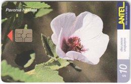 URUGUAY A-373 Chip Antel - Plant, Flower - Used - Uruguay