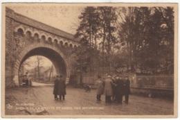 CP-JEN: Beauraing Avenue De La Grotte Et Arbre Des Apparitions. - Beauraing