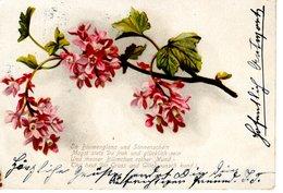 Blumenranke Strauss 1900 - Blumen