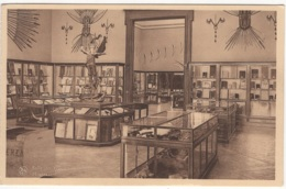 CP-JEN: Tervueren Musée Du Congo Belge Salle Des Bois. - Tervuren