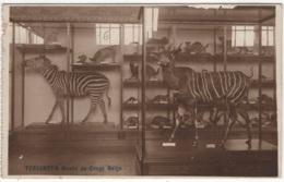 CP-JEN: Tervueren Musée Du Congo Belge. - Tervuren