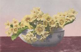 Fiori  ,  Una Ciotola Di Primule  -  Edit. Martin Rommel  & Co., Stuttgart  .  876  ,  1913 - Fiori