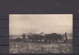 Romania / Roumanie / Rumanien - Munca La Camp - Photo Made In WW1 By German Soldiers - Romania
