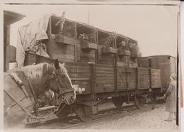 TIERTRANSPORTS AFRIKA SCHAU BERLINER ZOO GIRAFFEN BAHNHOF ANIMAUX ANIMALS ANIMALES 18*13CM Fonds Victor FORBIN 1864-1947 - Trenes