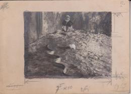 HARDCOPY  SNAKE  ANIMAUX ANIMALS ANIMALES 18*13CM Fonds Victor FORBIN 1864-1947 - Fotos