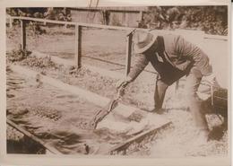 ALLIGATOR PARADIES FLORIDA COCODRILOS CROCODILES   ANIMAUX ANIMALS ANIMALES 18*12CM Fonds Victor FORBIN 1864-1947 - Fotos