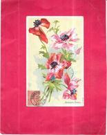 FLEURS - ANEMONES ROUGES  - ROY2/ARD - - Fleurs