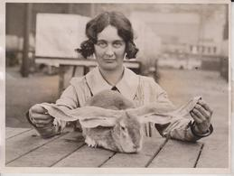 INTERNACIONAL POULTRY AND RABBIT SHOW  LOP EARED RABBIT  ANIMAUX ANIMALS ANIMALES 20*15CM Fonds Victor FORBIN 1864-1947 - Fotos
