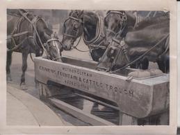 METROPOLITAN DRINKING FOUNTAIN ST MARTIN LE STRAND LONDON ANIMAUX ANIMALS ANIMALES 20*15CM Fonds Victor FORBIN 1864-1947 - Fotos