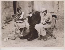 BRUIN MUSICAL TEA PARTY ZOO BEAR OSO OURS  CIRCUS ZIRKUS  ANIMAUX ANIMALS ANIMALES 20*15CM Fonds Victor FORBIN 1864-1947 - Fotos