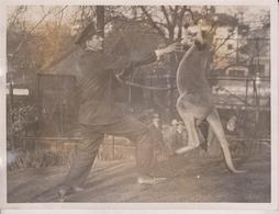 ZOO PETS TRICKS LONDON ZOO KANGAROO BOXING  ANIMAUX ANIMALS ANIMALES 20*15CM Fonds Victor FORBIN 1864-1947 - Sin Clasificación