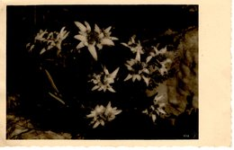 Edelweiss 1917 Feldpost - Blumen