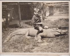 TIDE  AN ALLIGATOR CALIFORNIA  ANIMAUX ANIMALS ANIMALES TIERE 22*16CM Fonds Victor FORBIN 1864-1947 - Fotos