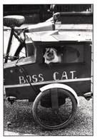 CPM - PHOTO Anonyme - LA LIMOUSINE - CHAT ... - Katten