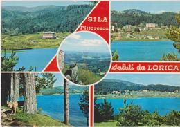 Cartoline Saluti Da -lorica - Saluti Da.../ Gruss Aus...