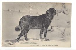 22278 - Barry Chien Du Grand St.Bernard - Cani