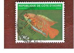 COSTA D'AVORIO (IVORY COAST) - SG 631  -   1980  FISHES: COLISA FASCIATA -  USED ° - Costa D'Avorio (1960-...)