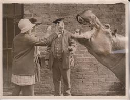 GEORGE HIPOPÓTAMO HIPPO  ZOO ANIMAUX ANIMALS ANIMALES TIERE  21*16CM Fonds Victor FORBIN 1864-1947 - Fotos
