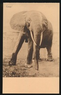 OLIFANT - Éléphants