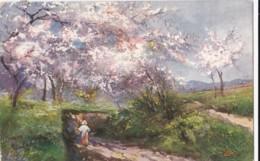 AO18 Landscape With Blossom - Artist Signed - Illustrators & Photographers