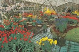 AN33 Keukenhof, Lisse Holland - Springflowers, Tulips, Daffodils - Lisse