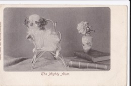 AM43 Animals - The Mighty Atom - Dog On Child's Chair - Dogs