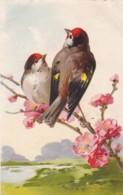 AS77 C. Klein - 2 Birds With Blossom - Klein, Catharina