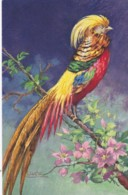 AS77 Animals - Birds - Bird Of Paradise?, Signed Carlo - Birds