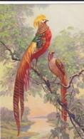 AS77 Animals - Birds - Bird Of Paradise?, Signed E.B. - Birds
