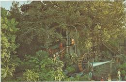 Disneyland Californie. Treehouse. - Disneyland