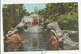 Disneyland Californie. Hippos Of The Congo. - Disneyland