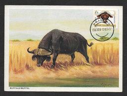 Bufle Bophuthatswana Afrique Du Sud Rare Carte Maximum Buffalo South Africa Homeland Rare Maxicard - Bophuthatswana