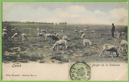 Genck Berger De La Campine Troupeau De Chèvres Shepherd With Herd Of Goats Pastor Cabras Dog Vinheta Philately Belgique - Genk