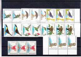 Suriname - Oiseaux